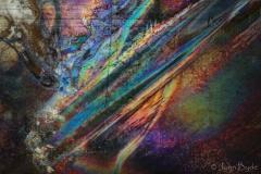 IMG_0345 (3)-CatNo254